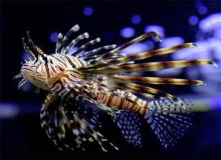 Самые красивые аквариумные рыбки - фото и названия, пресноводные