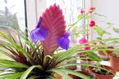 Редкие комнатные растения - фото и названия, виды