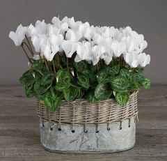 Самые красивые домашние цветы - фото и названия, в горшках