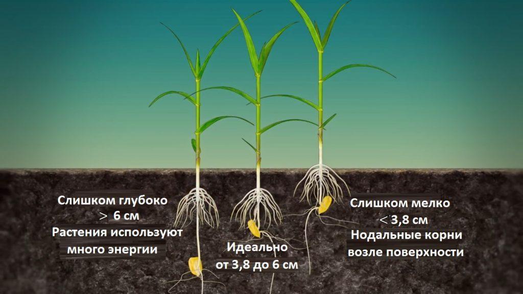 pravilnaya-glubina-poseva-kukuruzy-1024x576-2532741-4160542